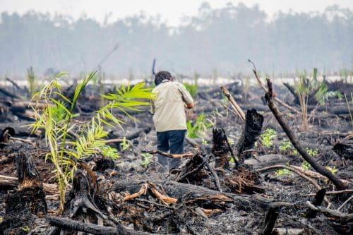 Eliminación del aceite de palma de nuestras tiendas